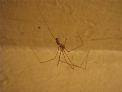 Пауки в ванной комнате