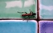 вывести насекомых в ванной