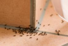 Муравьи в ванной: как избавиться от непрошеных гостей?